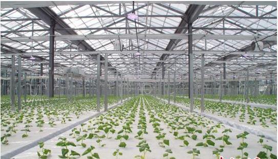 小马铃薯做成大产业 破解乌蒙山区贫困难题